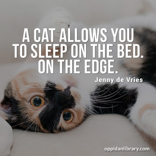 A CAT ALLOWS YOU TO SLEEP ON THE BED ON THE EDGE. JENNY DE VRIES