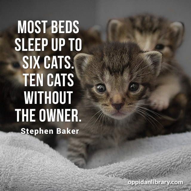 MOST BEDS SLEEP UP TO SIX CATS. THEN CATS WITHOUT THE OWNER. STEPHEN BAKER