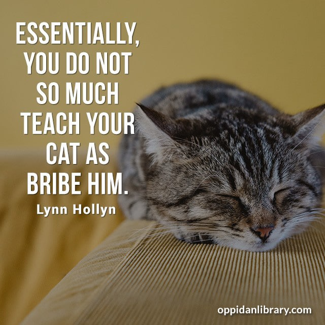 ESSENTIALLY, YOU DO NOT SO MUCH TEACH YOUR CAT AS BRIBE HIM. LYNN HOLLYN