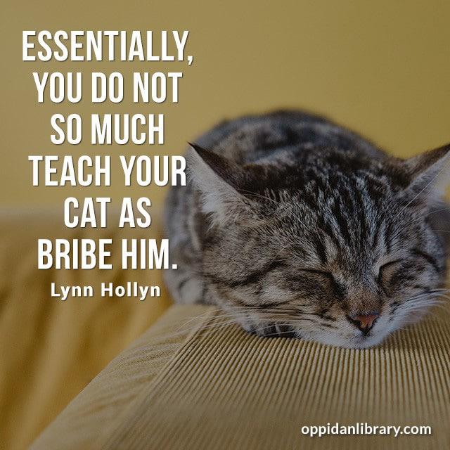 ESSENTIALLY, YOU DO NOT SO MUCH TEACH YOUR CAT AS BRIBE HIM. LYNN HOLLYN