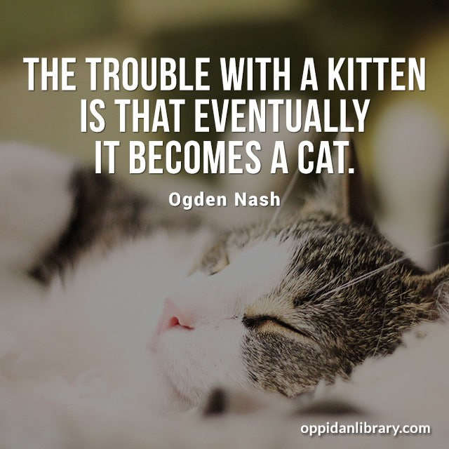 THE TROUBLE WITH A KITTEN IS THAT EVENTUALLY IT BECOMES A CAT. OGDEN NASH