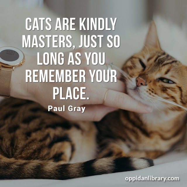 CATS ARE KINDLY MASTERS, JUST SO LONG AS YOU REMEMBER YOUR PLACE. PAUL GRAY