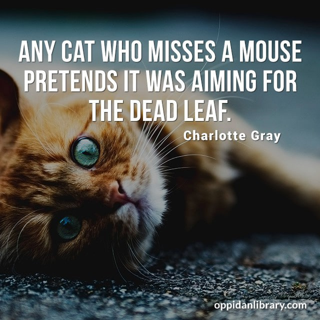 ANY CAT WHO MISSES A MOUSE PRETENDS IT WAS AIMING FOR THE DEAD LEAF. CHARLOTTE GRAY