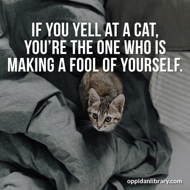 IF YOU YELL AT A CAT, YOU'RE THE ONE WHO IS MAKING A FOOL OF YOURSELF.