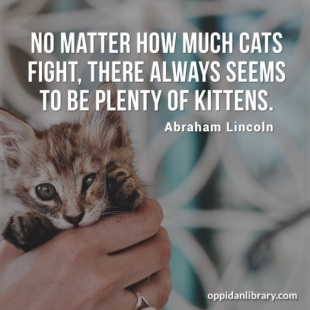 NO MATTER HOW MUCH CATS FIGHT' THERE ALWAYS SEEMS TO BE PLENTY OF KITTENS. ABRAHAM LINCOLN.