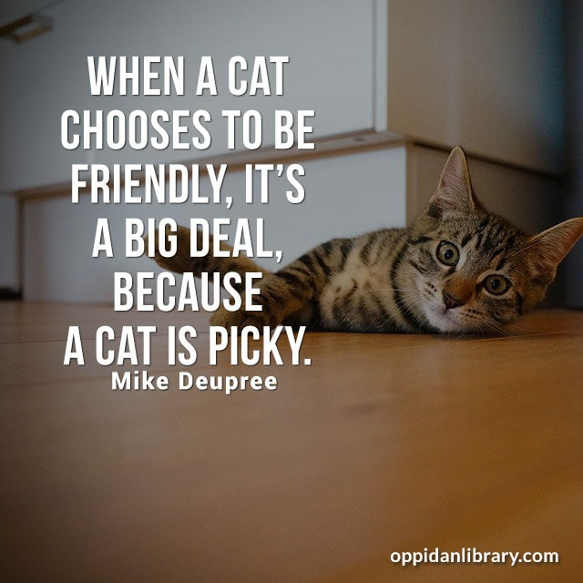 WHEN A CAT CHOOSES TO BE FRIENDLY' IT'S A BIG DEAL BECAUSE A CAT IS PICKY. MIKE DEUPREE