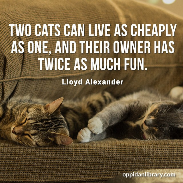 TWO CATS CAN LIVE AS CHEAPLY AS ONE, AND THEIR OWNER HAS TWICE AS MUCH FUN. LLOYD ALEXANDER