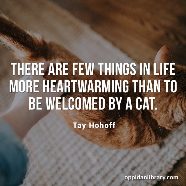 THERE ARE FEW THINGS IN LIFE MORE HEARTWARMING THAN TO BE WELCOMED BY A CAT. TAY HOHOFF