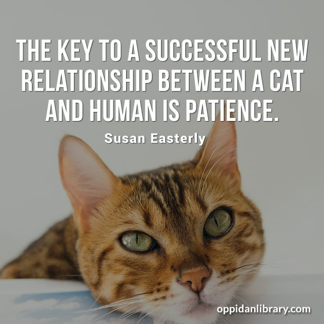 THE KEY TO A SUCCESSFUL NEW RELATIONSHIP BETWEEN A CAT AND HUMAN IS PATIENCE. SUSAN EASTERLY