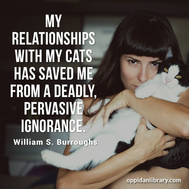 MY RELATIONSHIPS WITH MY CATS HAS SAVED ME FROM A DEADLY, PERVASIVE IGNORANCE. WILLIAM S. BURROUGHS
