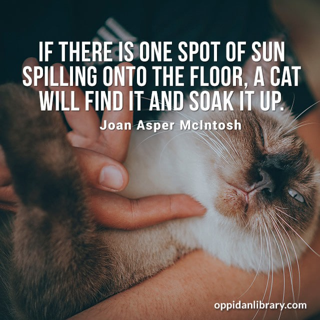 IF THERE IS ONE SPOT OF SUN SPILLING ONTO THE FLOOR, A CAT WILL FIND IT AND SOAK IT UP. JOAN ASPER MCINTOSH