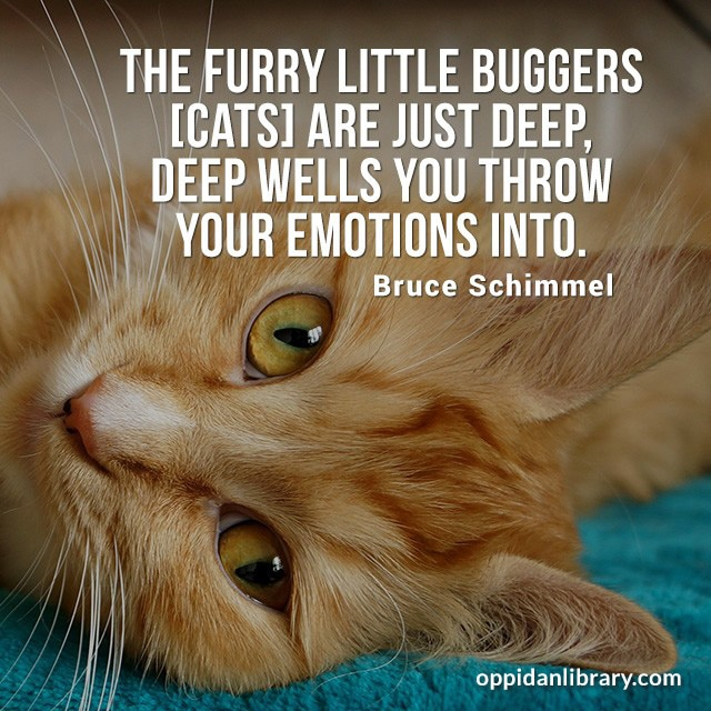 THE FURRY LITTLE BUGGERS CATS ARE JUST DEEP, DEEP WELLS YOU THROW YOUR EMOTIONS UNTI. BRUCE SCHIMMEL