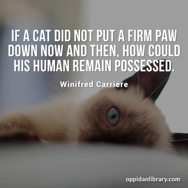 IF A CAT DID NOT PUT A FIRM PAW DOWN NOW AND THEN, HOW COULD HIS HUMAN REMAIN POSSESSED. WINIFRED CARRIERE
