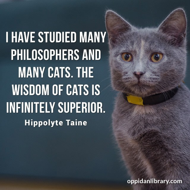 I HAVE STUDIED MANY PHILOSOPHERS AND MANY CATS. THE WISDOM OF CATS IS INFINITELY SUPERIOR. HIPPOLYTE TAINE