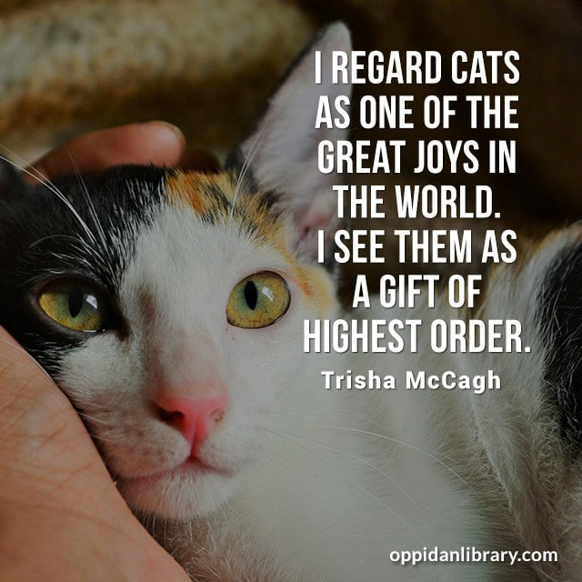 I REGARD CATS AS ONE OF THE GREAT JOYS IN THE WORLD. I SEE THEM AS A GIFT OF HIGHEST ORDER . TEISHA MCCAGH