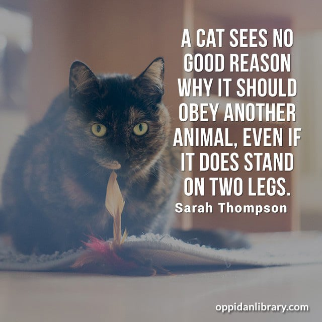 A CAT SEES NO GOOD REASON WHY IT SHOULD OBEY ANOTHER ANIMAL' EVEN IF IT DOES STAND ON TWO LEGS. SARAH THOMPSON
